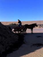 Termini Imerese (PA) - Operaio intento a caricare la sabbia nel suo carretto all'interno del porto (ago 2005) XV  - Termini imerese (3607 clic)