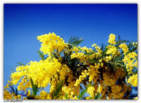 8 Marzo - In omaggio a tutte le donne PALERMO AngelDevil