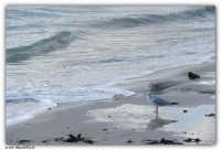 Mondello - (Pa) - Scrutando il mare  - Mondello (3409 clic)