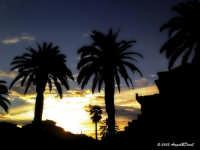 Palermo - piazza Massimo -  uno scorcio tra le palme di un'alba palermitana  - Palermo (1527 clic)