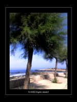 Sferracavallo (PA) - I pini sul lungomare di Barcarello (sett 2005) IL  - Sferracavallo (4061 clic)