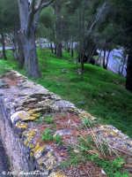 Palermo, Monte Pellegrino - Suggestivo scorcio di natura lungo la strada che porta in cima al colle.