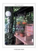 Un angolino del mio giardino (ott 2005) LXVIII  - Palermo (3083 clic)
