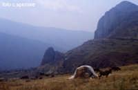 Tipico paesaggio nebroideo tra Longi ed Alcara. Sullo sfondo le Rocche del Lauro.  - Alcara li fusi (5929 clic)