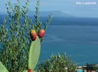 Veduta di Vulcano accanto ad ulivi e fichi d'india.  - Piraino (4893 clic)