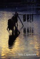 cozze... al tramonto, nel lago piccolo.  - Ganzirri (5721 clic)