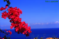 Bougainvillea affacciata sul mare di Calanovella.  - Piraino (4570 clic)