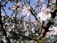 primavera a Ragusa Ibla  - Ragusa (3145 clic)
