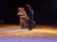Ettore Weber e l'ippopotamo Pippo (Weber Circus)  - Palermo (4777 clic)