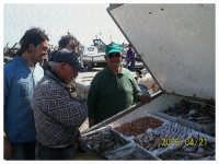 capannone-pesci...  - Licata (2427 clic)