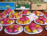fichidindia -mercato di ballarò  PALERMO PINA LETIZIA