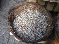 cesto di lumache -mercato di ballarò   - Palermo (10981 clic)