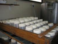 Tuma, formaggio fresco - foto scattata in una masseria di Collesano (PA)  - Collesano (10920 clic)