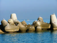 I gabbiani ed il mare riposano.  - Villafranca tirrena (8445 clic)