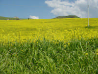 ... il sole accende i colori dei campi e del cielo luminoso ... CASTELLANA SICULA Antonio Di Gangi
