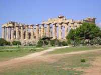 Tempio E  - Selinunte (2746 clic)