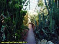 Orto Botanico - Serra delle Succulente PALERMO Guido Ruggiero
