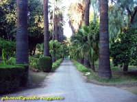 Orto Botanico - Viale Francesco Bruno PALERMO Guido Ruggiero
