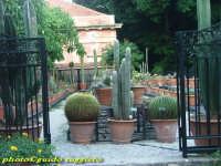 Orto Botanico - Collezione di Succulente PALERMO Guido Ruggiero
