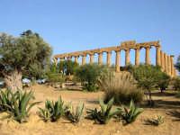 Tempio di Giunone.  - Agrigento (2736 clic)