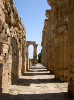 Situata su di una spianata alta circa 30 metri s.l.m., Selinunte prende il nome dal Selinon. Venne fondata da coloni di Megara Hyblaea guidati dall' ecista Pammilos, nel VII secolo a.C. Tempio E.  - Selinunte (2340 clic)