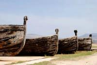 Vecchi vascelli per la cattura dei tonni.  - Bonagia (1879 clic)
