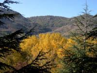 Dall'alto dei suoi 1979 metri s.l.m., Pizzo Carbonara, la cima più alta delle Madonie. Le montagne delle Madonie si ergono maestose dalle acque del Mar Tirreno sfiorando i duemila metri a pochissima distanza dal mare, fungono da immensa terrazza naturale sulla distesa azzurra e su tutta l'Isola, offrendo al visitatore paesaggi di incommensurabile bellezza.   - Madonie (5006 clic)