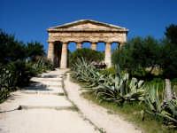 Il tempio, eretto nel 430 a.C., è un elegante edificio dorico.  - Segesta (2231 clic)