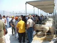 Mostra pecora valle del Belice 04 Settembre 2004  - Santa margherita di belice (5265 clic)