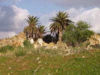 Vecchio centro dopo il terremoto  - Montevago (6396 clic)