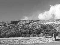 Etna, boschi e colate  - Etna (2409 clic)