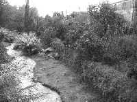 Il torrente Macchia in piena  - Macchia di giarre (4347 clic)