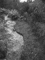 Il torrente Macchia in piena  - Macchia di giarre (4395 clic)