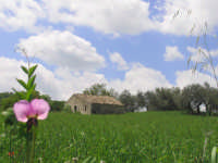 campo nei dintorni di Palazzolo  - Palazzolo acreide (3477 clic)