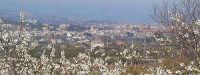 Panoramica di un tratto di costa jonica ripreso da una collinetta a monte di Macchia  - Macchia di giarre (4782 clic)