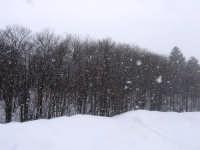 nevicata sull'Etna  - Etna (2503 clic)