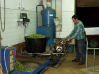 OLEIFICIO PALMERI. Pesatura delle olive.  - Montagnareale (5497 clic)