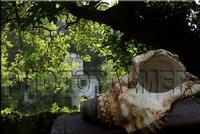 DSC_9236a1-in primo piano la famosa brogna sullo sfondo il mulino di capo   - Montagnareale (3368 clic)