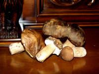 Funghi porcini di Montagnareale.  - Montagnareale (4328 clic)