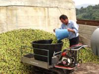 Olive della varietà Biancolilla stanno per essere molite dal frantoio oleario PALMERI di MOntagnareale;si ricaverà un olio pregiatissimo con un profumo particolare e un fruttato meraviglioso! Verrà messo in vendita a 7 euro al litro. Per prenotazioni telefonare al n.0941/315015 oppure inviare una E-mail a oleifpalmer@msn.com  - Montagnareale (9817 clic)