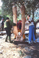 S.Nicolella;Montagnareale: Festa del Maiale.  - Montagnareale (3279 clic)