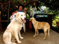 Il mio Cane e la sua fidanzata.  - Montagnareale (3151 clic)