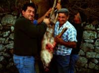Macellazzione di un maiale selvatico nel parco dei nebrodi.  - San fratello (9435 clic)