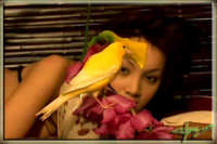 Il l'uccellino di Giselle.  - Montagnareale (3049 clic)