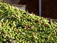OLEIFICIO PALMERI: olive della varietà BIANCOLILLA. Da queste olive viene estratto L'OLIO EXTRAVE