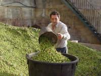 OLEIFICIO PALMERI- olive della varietà Biancolillavengono portate al frantoio per ricavare un olio leggerissimo dal fruttato meraviglioso e dal profumo unico! Nella foto l'operaio è il Sign.Giovanni Segreto.  - Montagnareale (12408 clic)