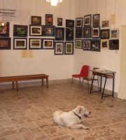 Il mio cane alla mostra fotografica.  - Montagnareale (3118 clic)