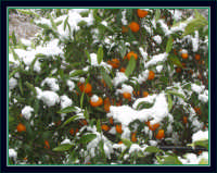 Neve a Montagnareale-07/02/2006.  - Montagnareale (2285 clic)