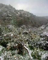 Neve a Montagnareale-07/02/2006.  - Montagnareale (2090 clic)