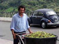 OLEIFICIO PALMERI: Giovanni Segreto trasporta le olive nel frantoio.  - Montagnareale (3169 clic)